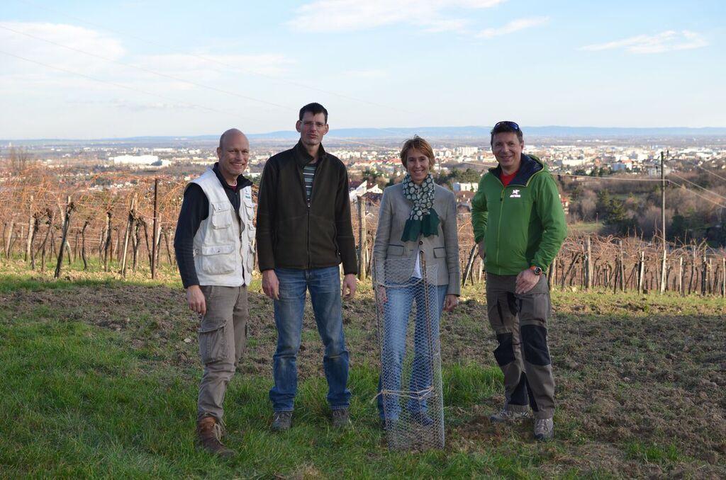 Pflanzung von 4 Schneebirnen in Maria Enzersdorf